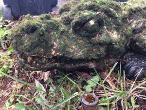 1-krokodyl