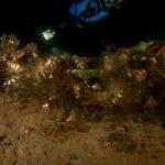 Stare Drawsko - Ryby zaplątane w pozostałości sieci
