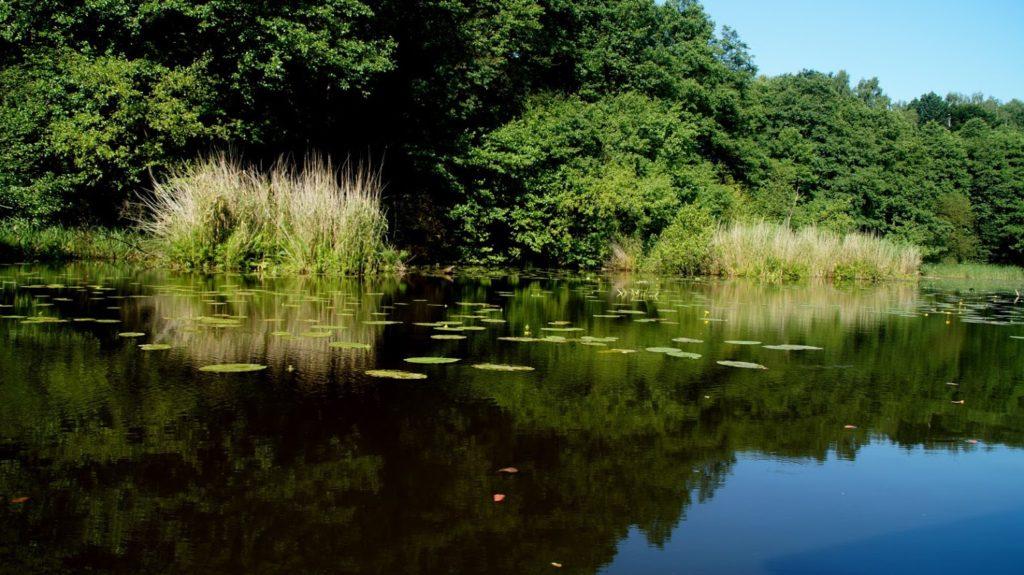 Brunaty kolor wody wynika chyba z minimalnej wymiany z główną częścią jeziora, ma jednak swój urok.