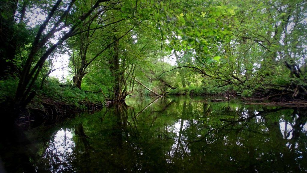 Czysta woda, tysiące narybku, piołunowy zapach, tunel z drzew .... piękne i niesamowite.