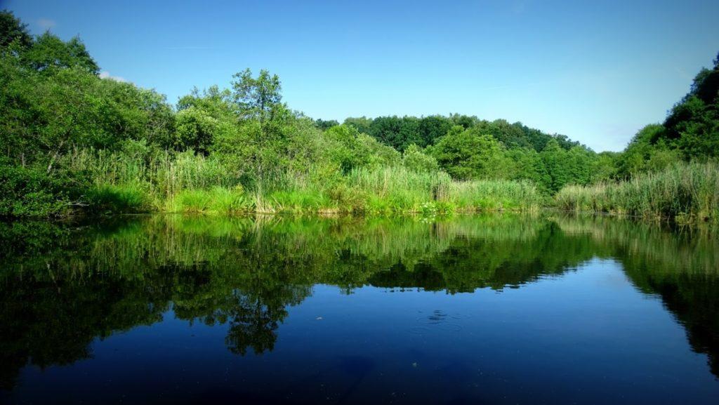 Woda tak dzika jak można tylko sobie wyobrazić, śpiew ptaków odgłosy polowania ryb drapieżnych i nawet ważki których nigdzie wcześniej nie widziałem.